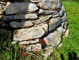 pCoccinelles au Puech Monseigne sur le Lévézou et point de vue-levezou