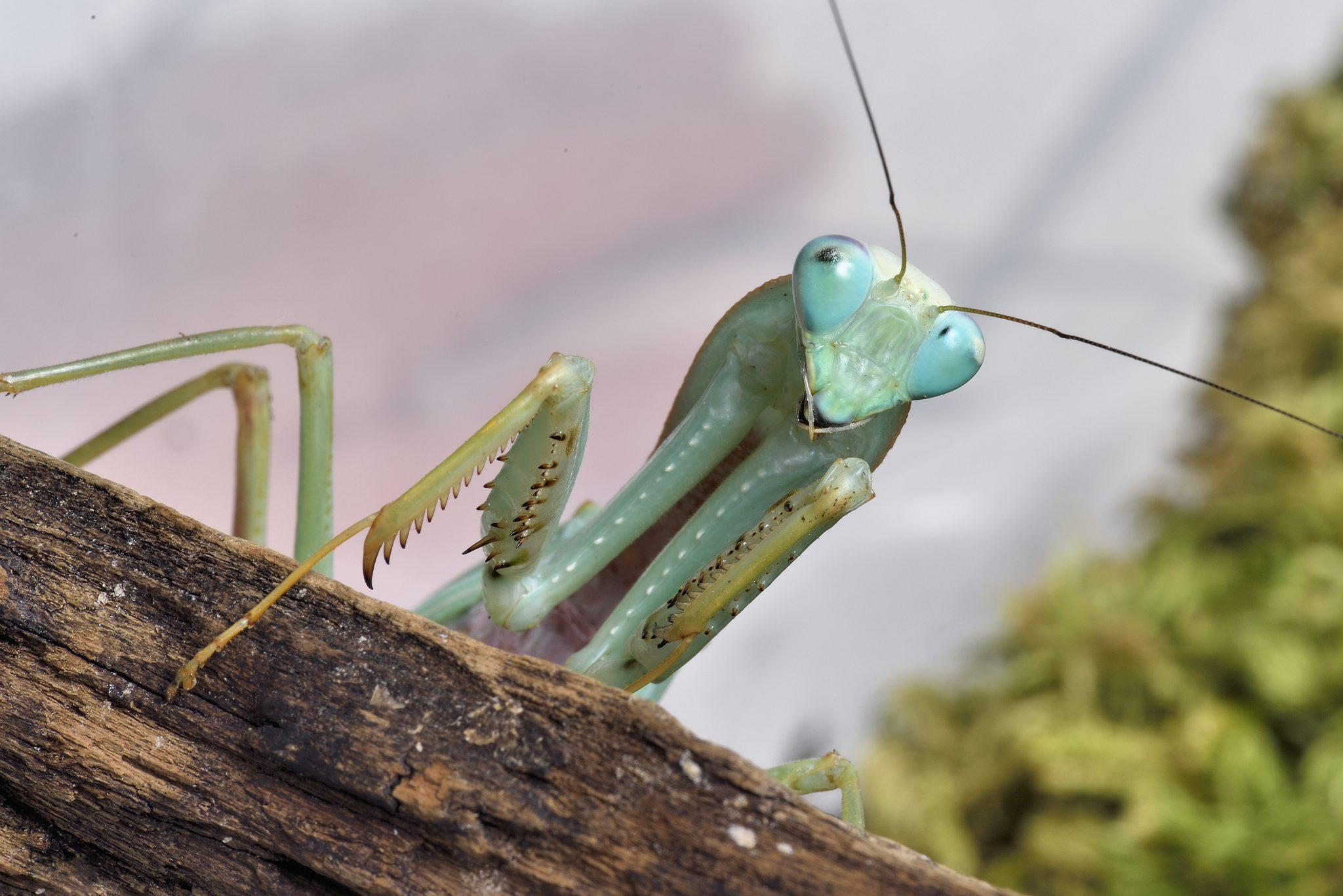 insecte-micropolis-levezou-aveyron©photothèque-micropolis