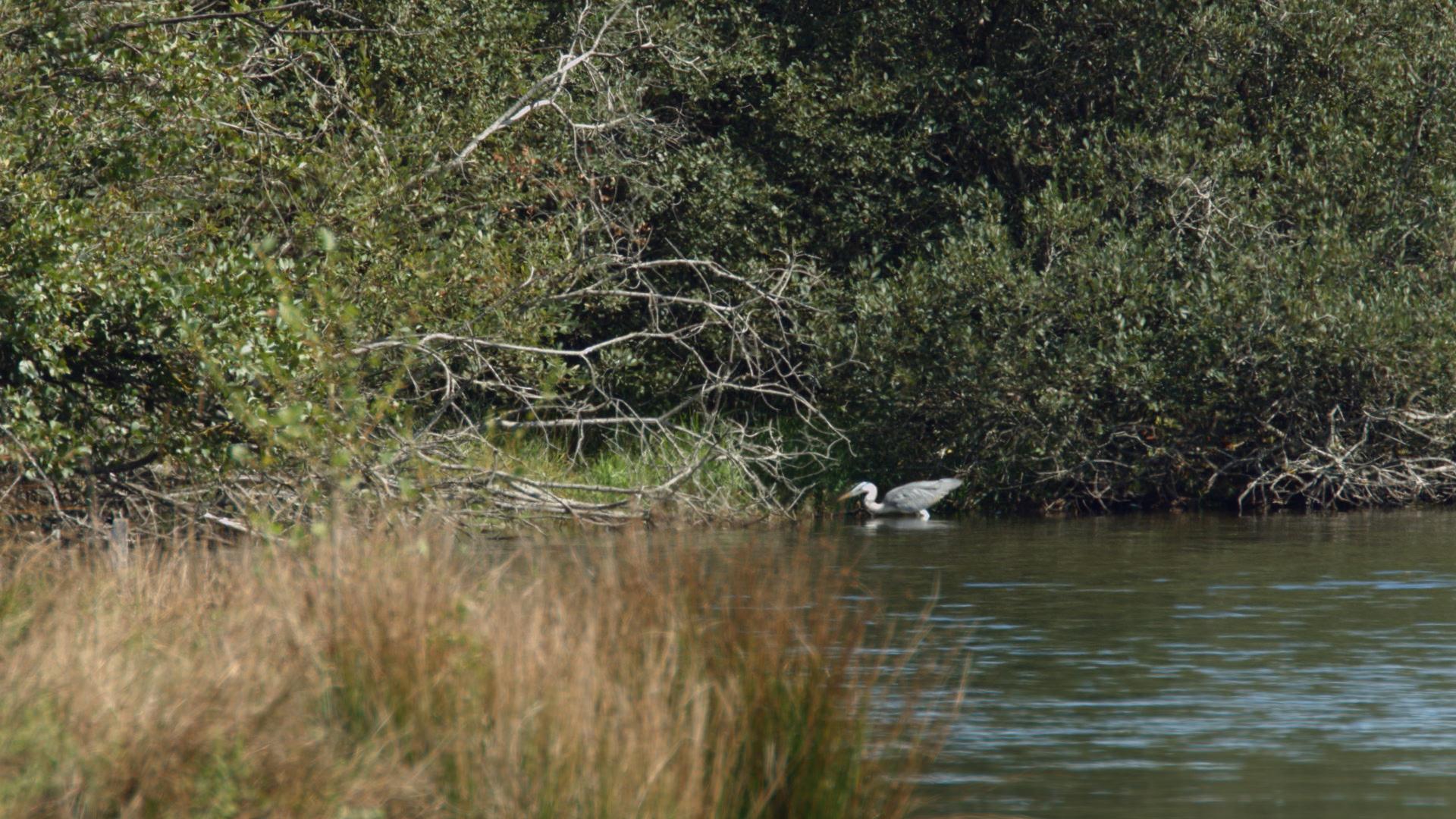 Oiseaux migrateurs à l'observatoire du lac de la Gourde