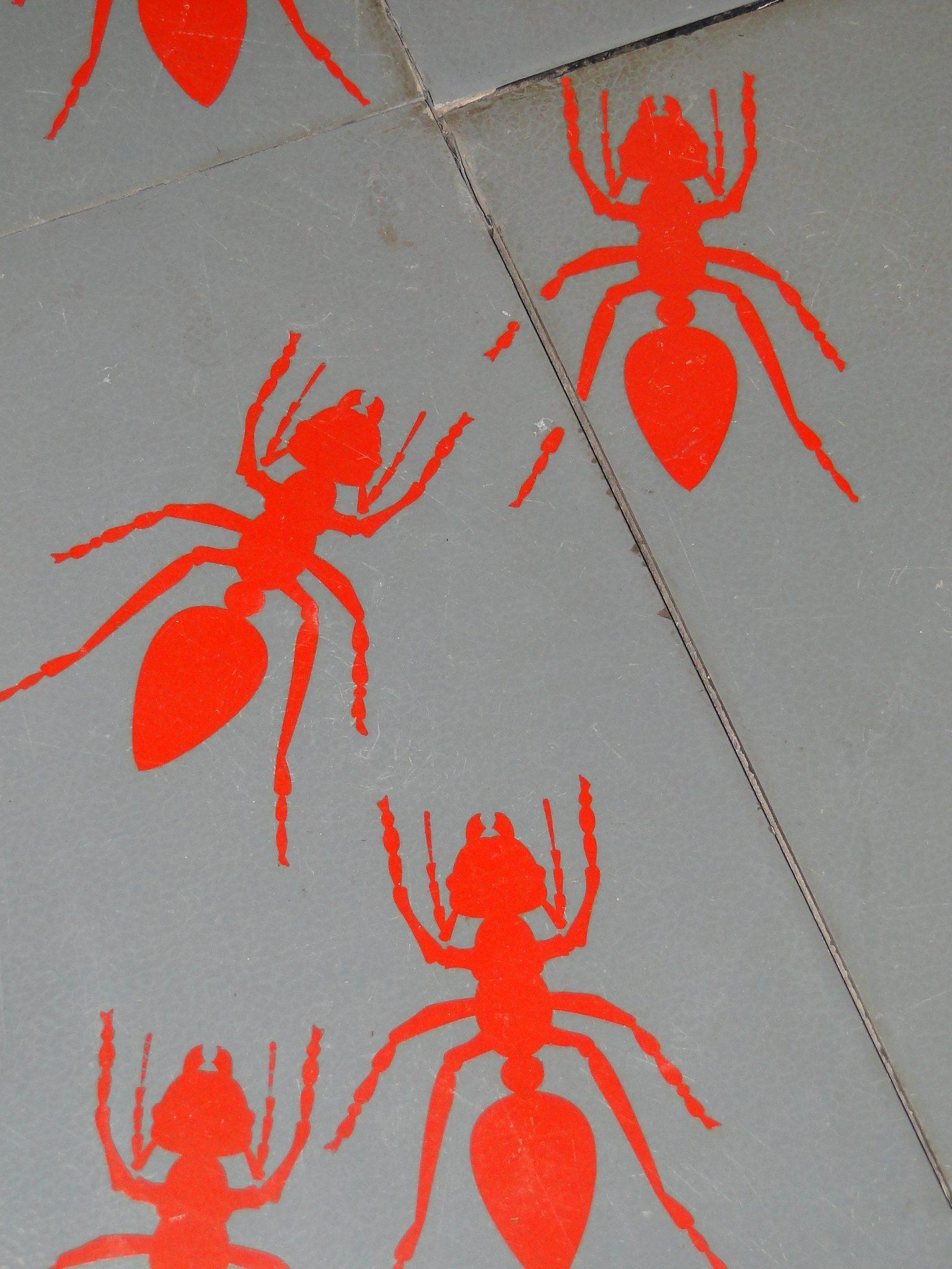 micropolis-cite-insectes-saint-leons-aveyron-pareloup-levezou